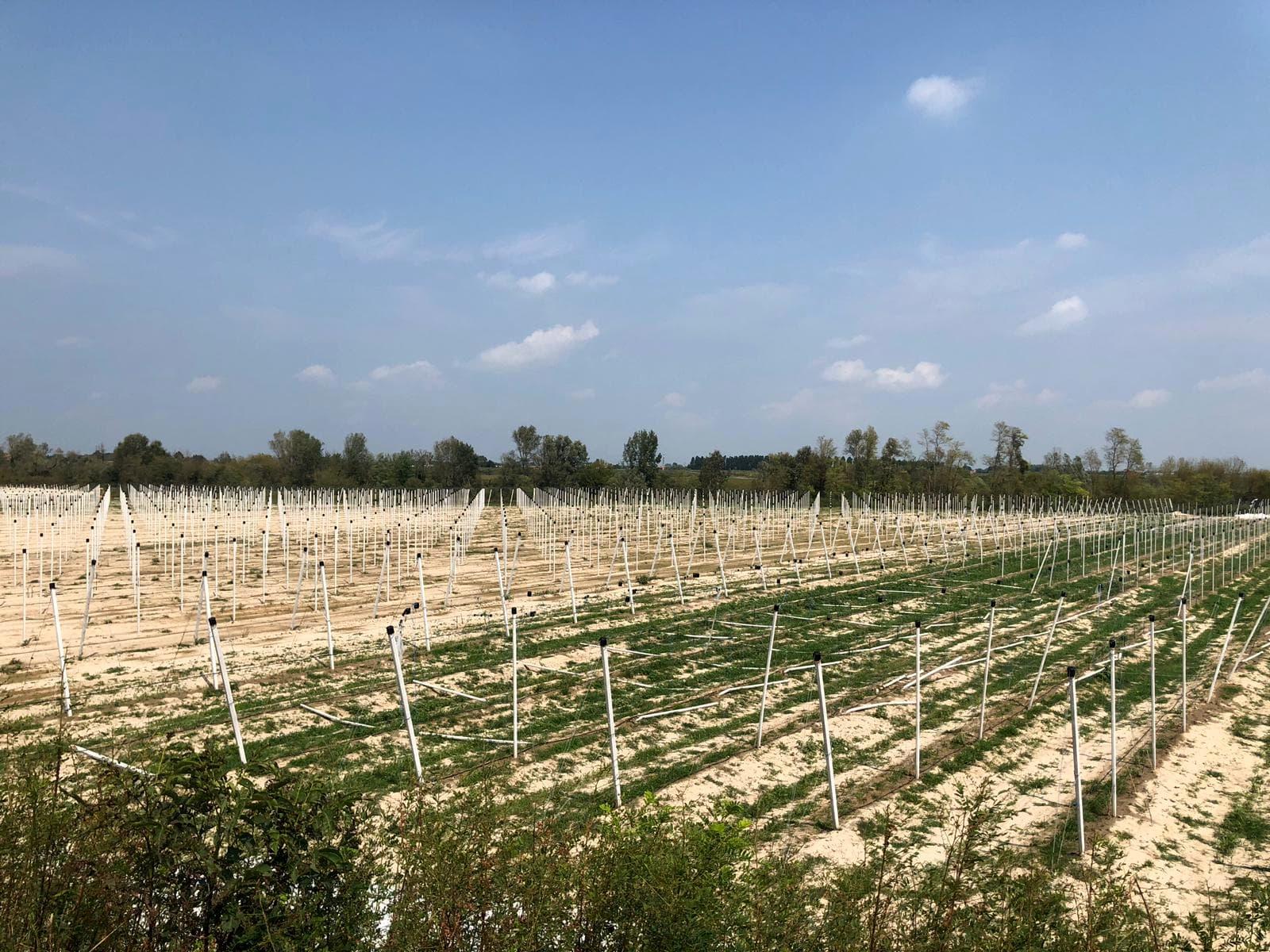 1330-2019 - colture colpite dal maltempo a Zenson-2
