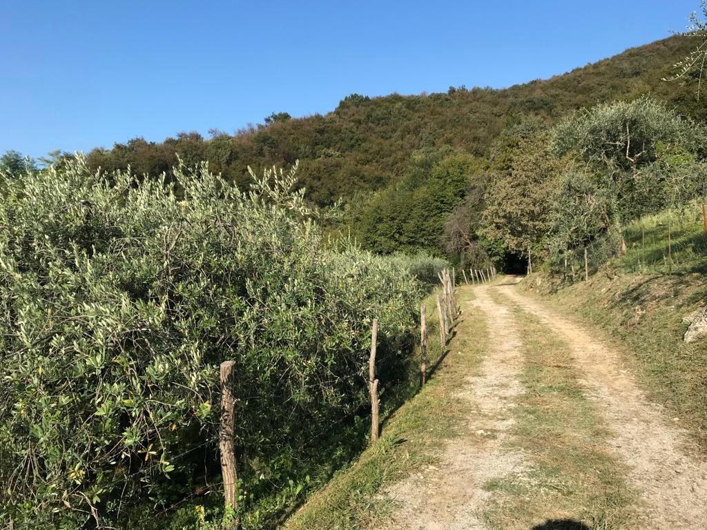 olivi 1-2