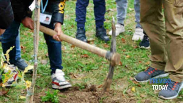 treviso: i bambini piantano una quercia per la giornata nazionale dell'albero-2