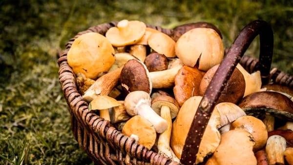 Festa d'autunno a Portobuffolè: degustazioni e mostra mercato
