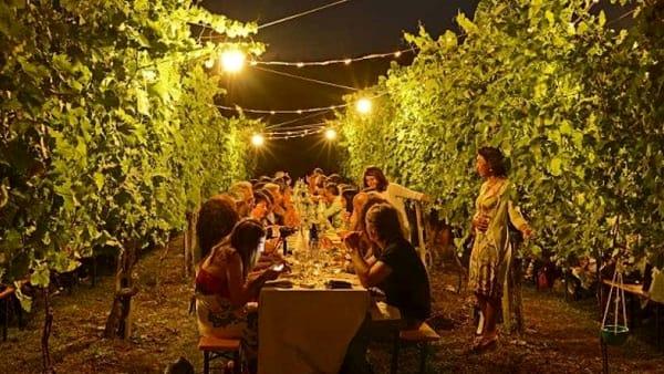 Cena d'estate tra i filari della cantina Pizzolato