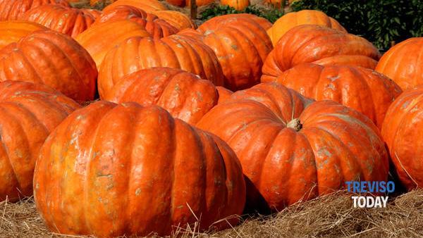 Halloween per bambini alla Festa della zucca di Zenson