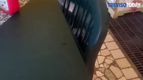 Signoressa invasa dalle mosche, residenti contro l'impianto di compostaggio
