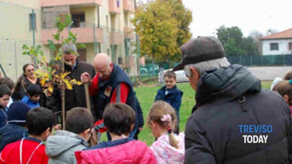 treviso: i bambini piantano una quercia per la giornata nazionale dell'albero-4
