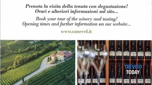 Visita in cantina - wine tour & tasting