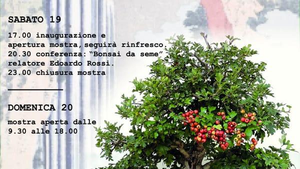 A Crocetta del Montello una mostra dedicata ai bonsai
