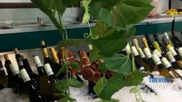 treviso festeggia l'autunno con l'eccellenza: torna calici in pescheria-4