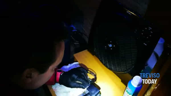 Blitz a casa dello spacciatore: il cane Hitch trova la droga in un caricabatterie