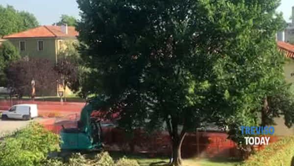 Alberi abbattuti per ampliare la scuola, lo sdegno dei residenti